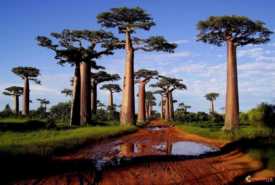 allee-des-baobabs-morondava-madagascar-visoterra-28192