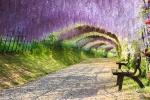 Tunel-Wisteria-Japón
