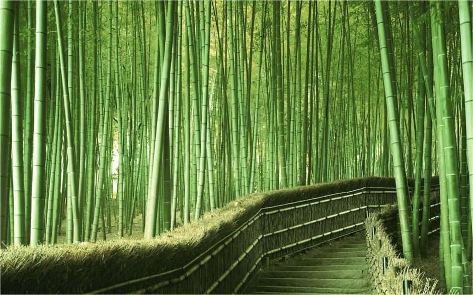 bosque de bambu