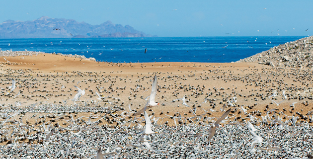 escenarios-naturales-mexico-isla-tiburon-baja-california-sur-feb13