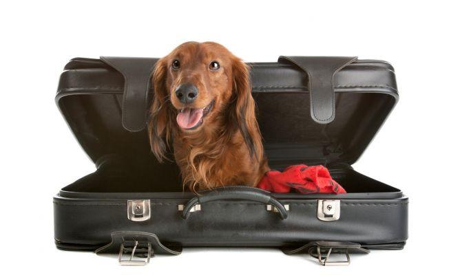 perro_viajar4