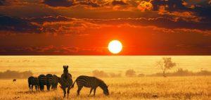 viaje-de-novios-safari-sudafrica-950x450